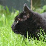 Gesprek en healing dieren - Vinnie