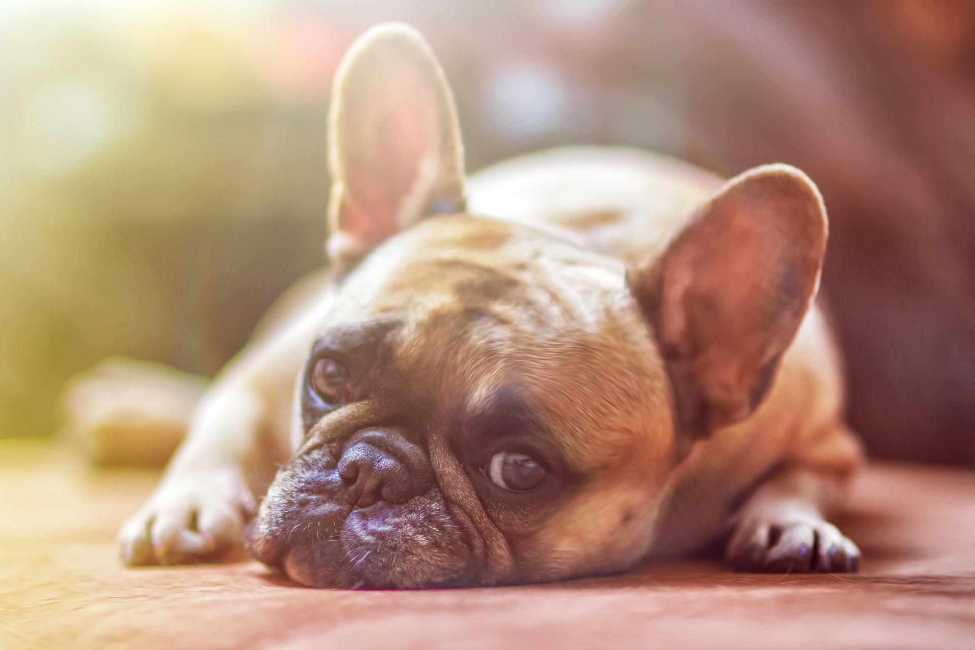 healing voor honden