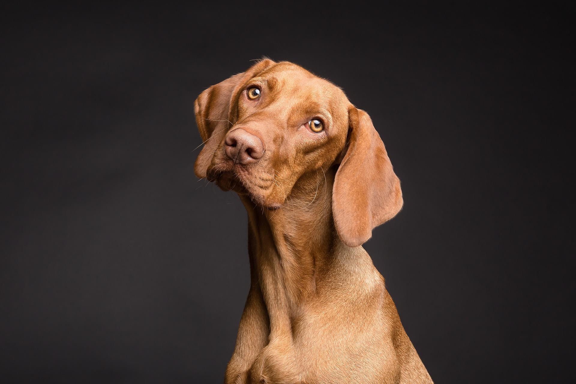 Dierentolk consult hond