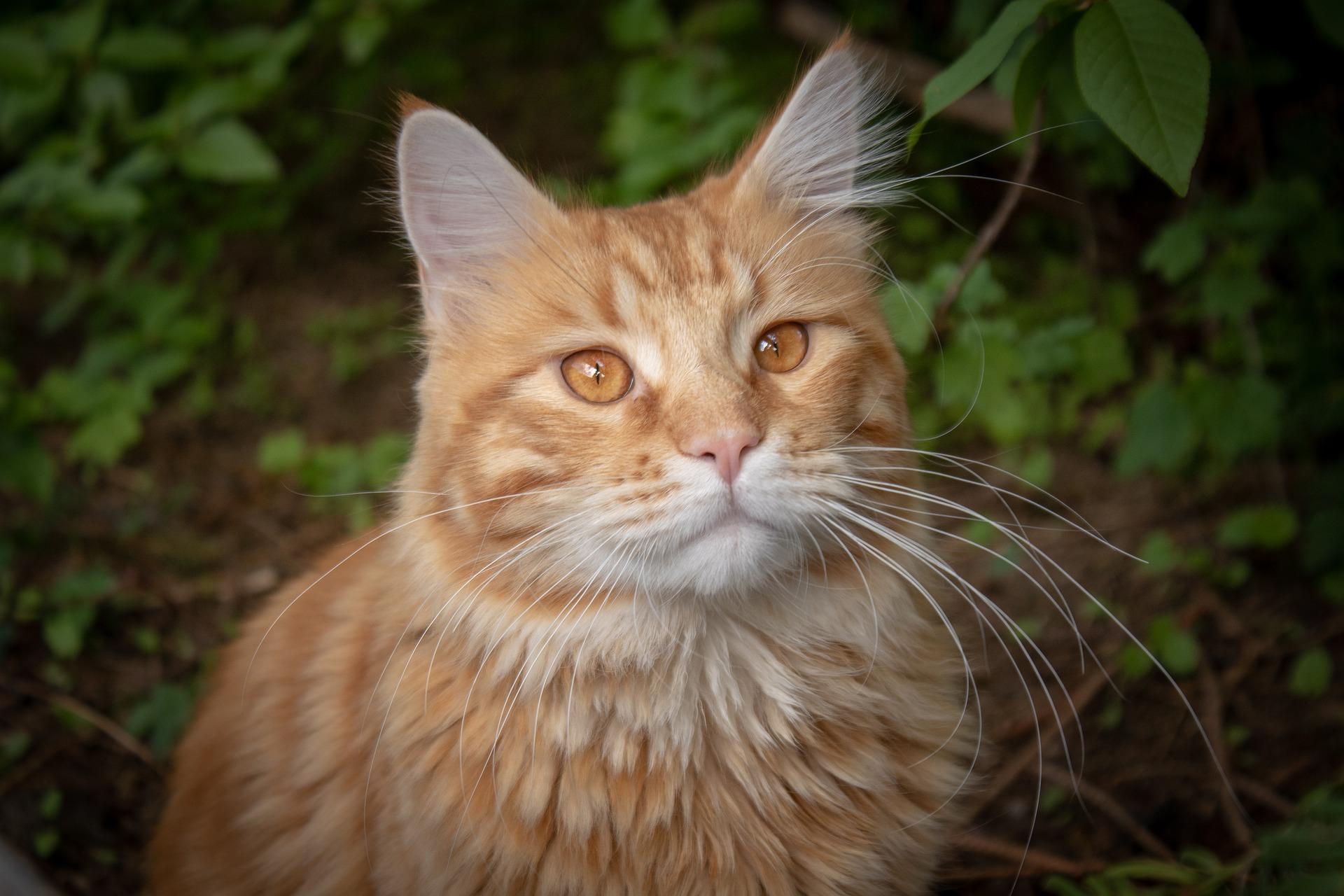dierentolk consult kat