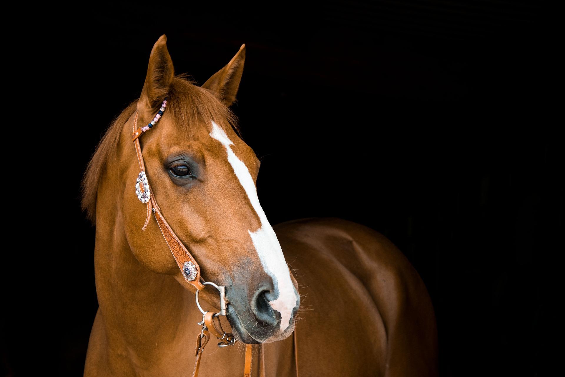 dierentolk consult paard