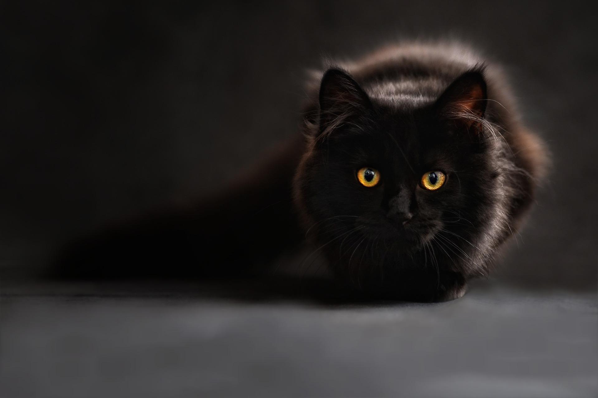 Healing voor katten