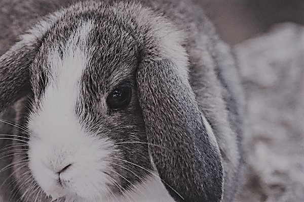 Dierentolk consult overleden konijn