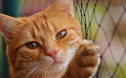 Dierentolk healing Bach bloesem Advies dieren